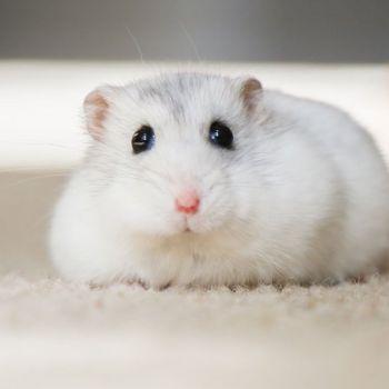 Hamster-Haltung-im-Winter-Blog-2020