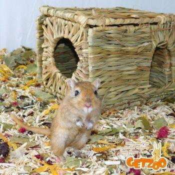 Getzoo-Blog-Nager-Versteck-Kleintier-Tier-Spielzeug-Hoehle-Tunnel-10-08-2019