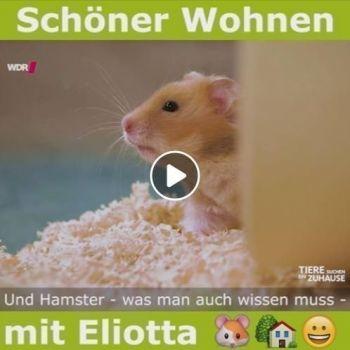 getzoo-wdr-schoer-wohnen-mit-eliota-2017-03-26-tv-presse