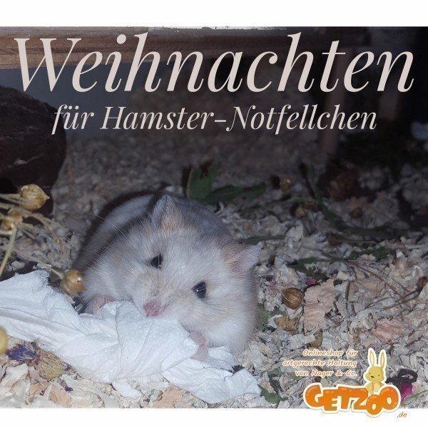 Hamster-Rettung-mit-Herz-Getzoo-Spenden-2019-Notfellchen