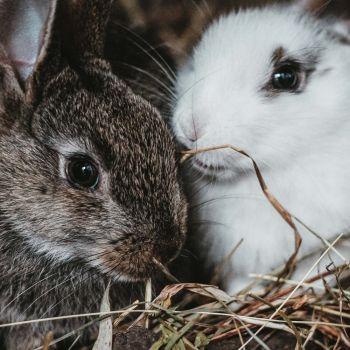 Kaninchenhaltungaussen-im-Winter